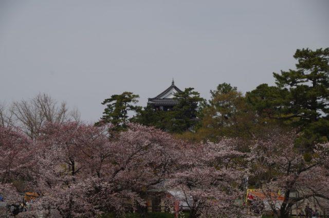 桜と岡崎城♪