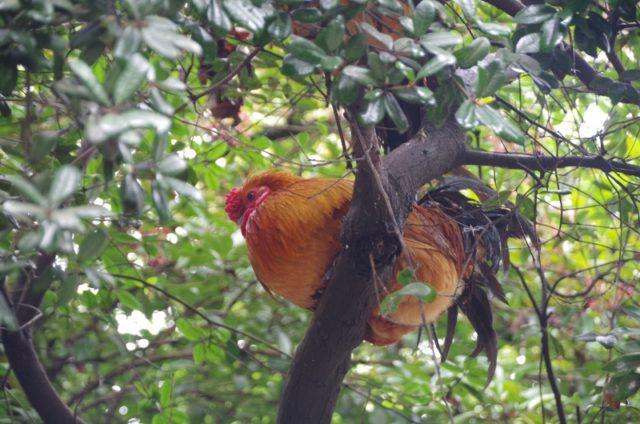 木の上にいた鳥たち!